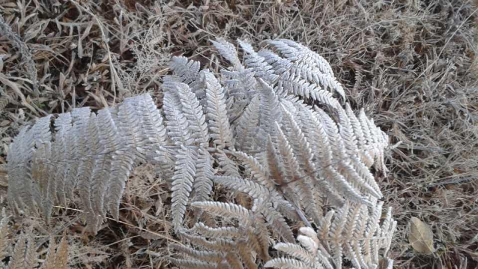 Mahabaleshwar , temperature drop , snow flex ,