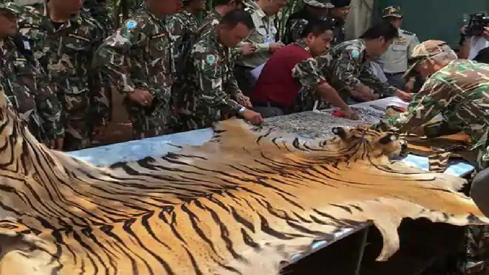 tiger, smuggling