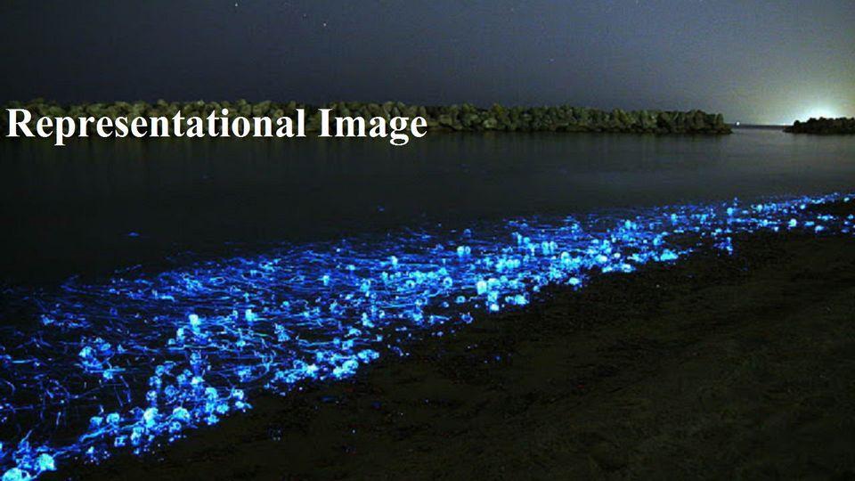 Malwan, Maharashtra , Bio Luminous ,
