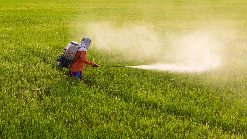chemical fertilizers, dabhol, ramdas kadam