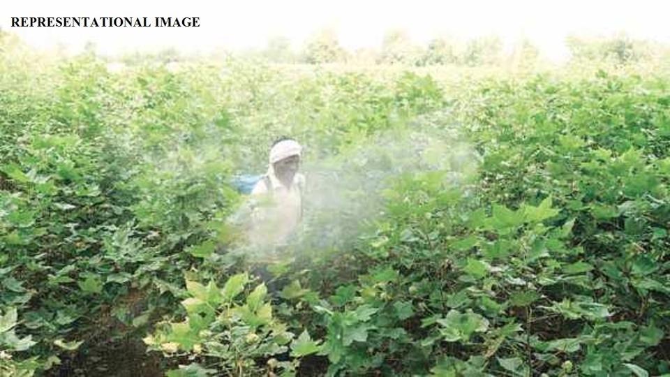 pesticide poisoning, maharashtra, court