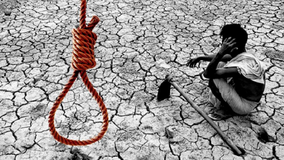 farmer, suicide