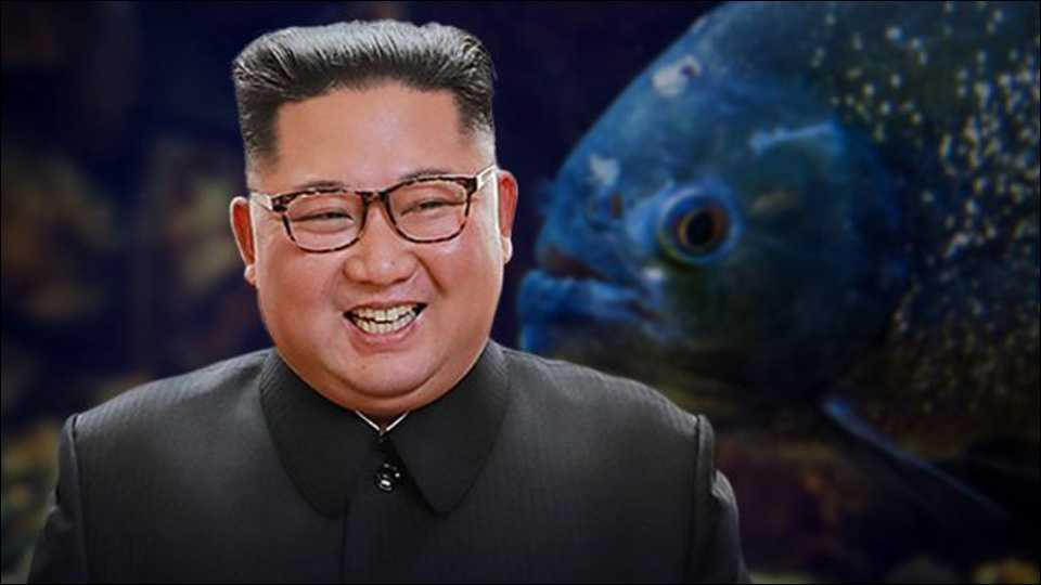 North Korean,  thrown into piranha filled fish tank
