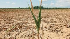 drought investigation in maharashtra