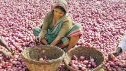 Why onion prices are bringing tears to farmers' eyes