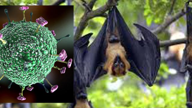 State Health Dept on high alert for Nipah
