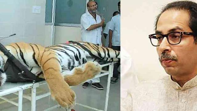 Committee set up to probe tigress' killing a farce