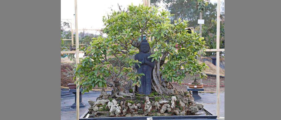 Bonsai collection of Prajakta Kale at her farm house in Maval. An exhibition of her collection can be seen from 22 Feb  to 25 at Agriculture college ground