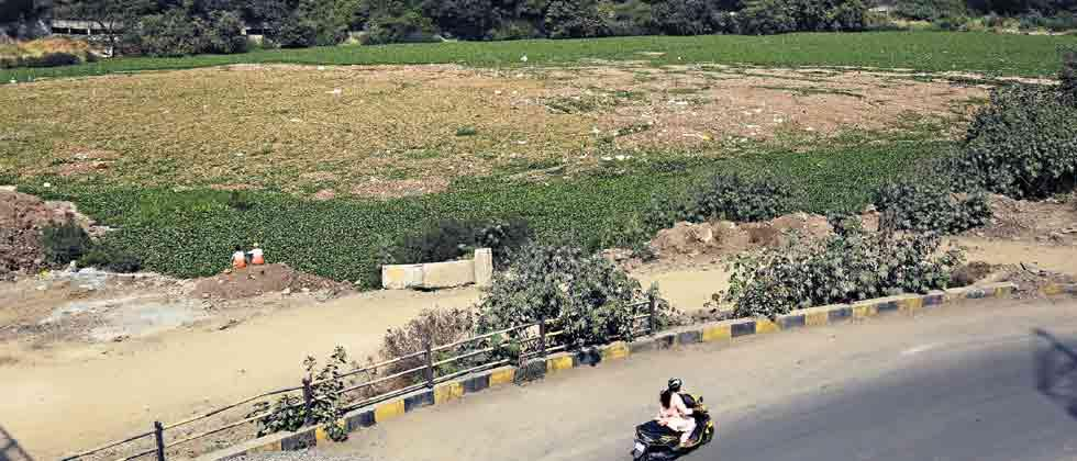 Hyacinth growth in Mula creates problem for residents