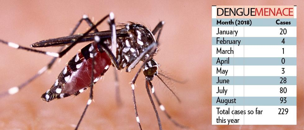 Dengue cases are on the rise in city