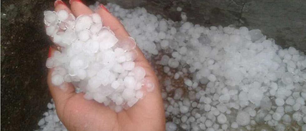 Hailstorm devastates Maha farmers