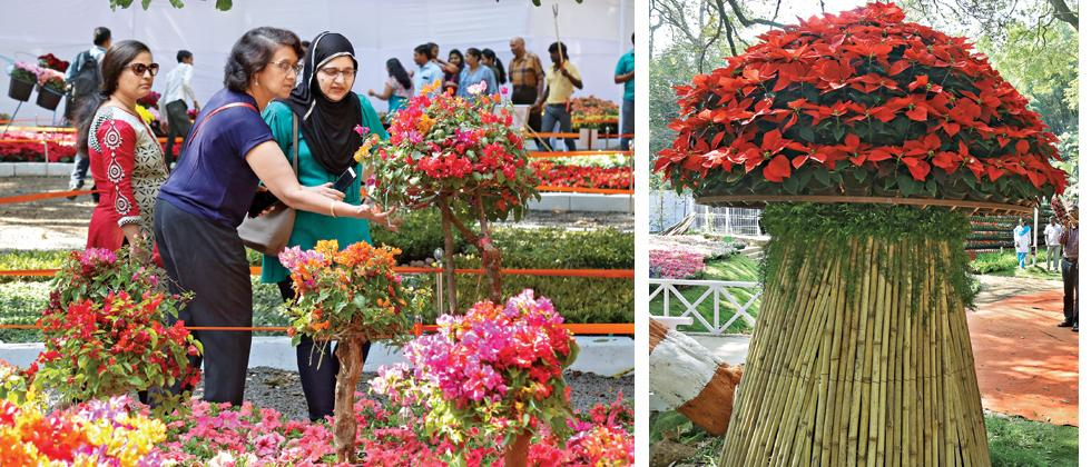 Huge crowds at Empress Garden flower expo
