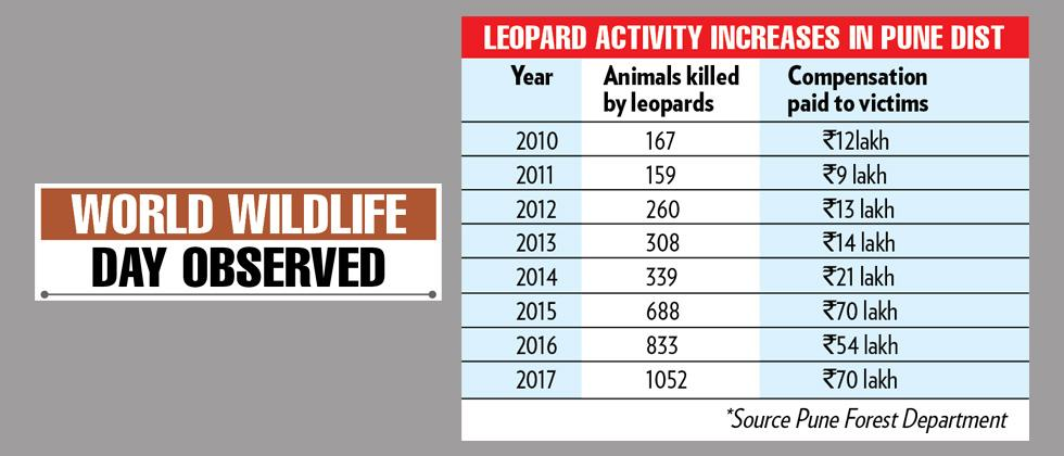 'Leopard population study required'