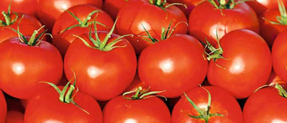 Tomato prices soar by Rs 20
