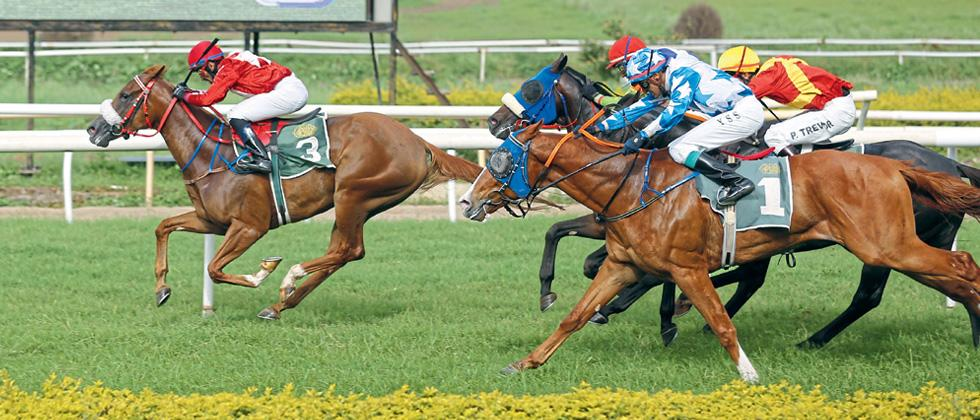 Frieze triumphs in August Handicap
