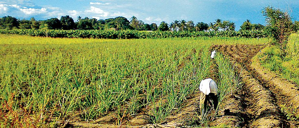 State Agriculture Dept mulling ban on herbicide