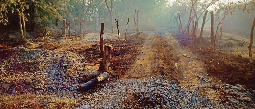 Tree activists irked by half-hearted work by PMC on replanting trees