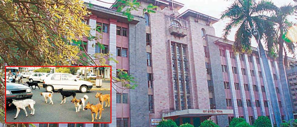 PMC to spend Rs 2 crore to control stray dog menace