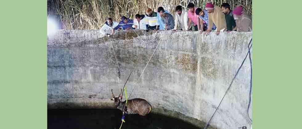 Sambar deer and civet saved from drowning