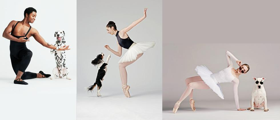 Ballet with dogs