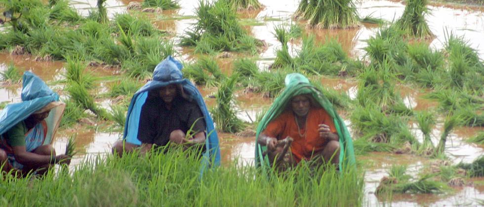 Kharif sowing hit by deficit rains; acreage down 27 pc so far