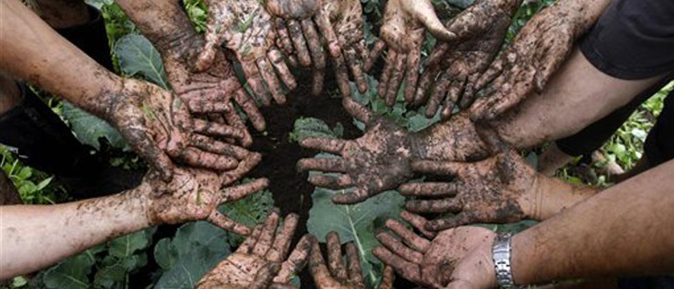 Govt declares mission to promote organic farming