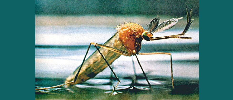 Failure to curb dengue, chikungunya rocks GB