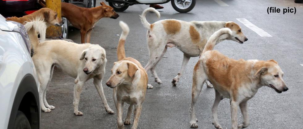 Civic body to request govt to relax rules on stray dogs