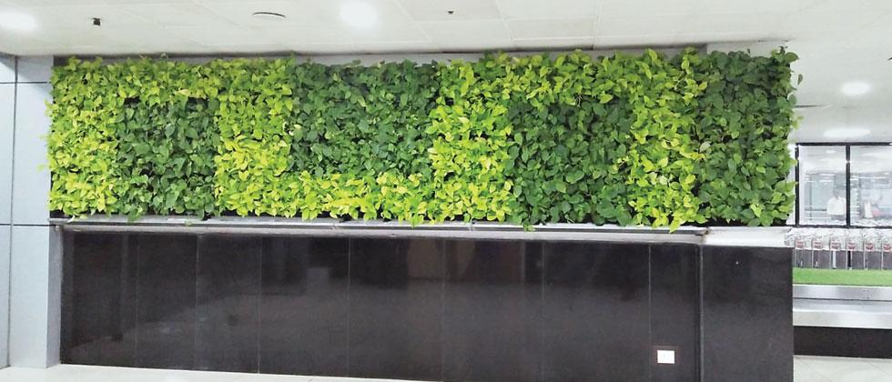 A vertical green wall has been installed in the arrival hall at Pune airport