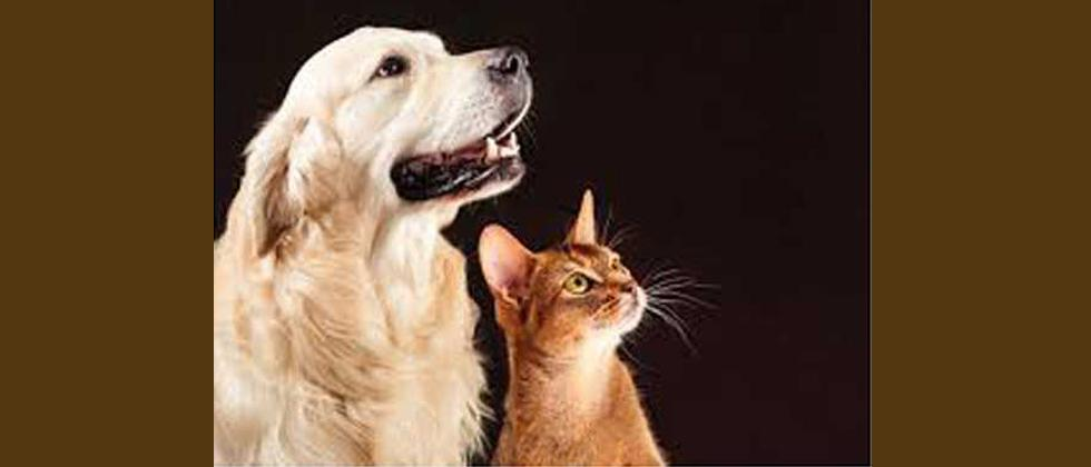 7 dogs, 14 cats found dead in Yerawada