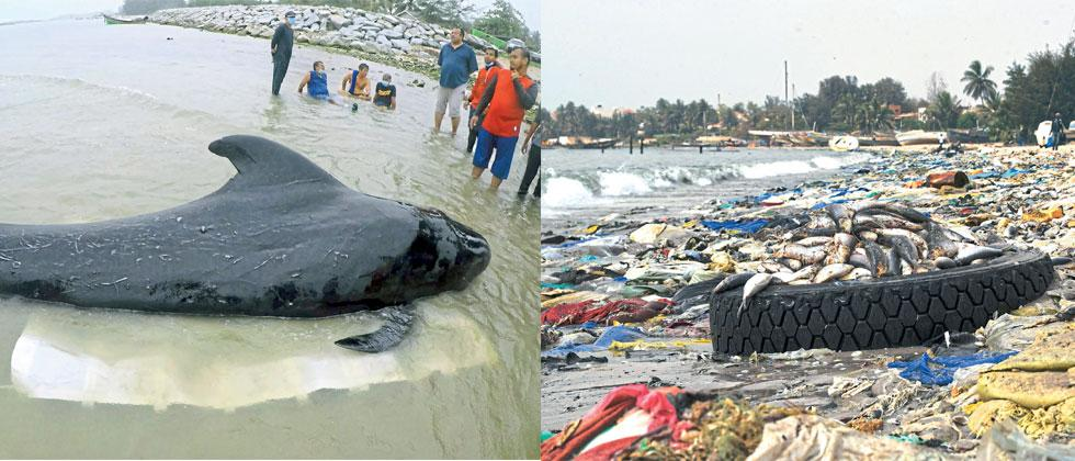 (L) A whale died in southern Thailand after swallowing more than 80 plastic bags. (R) Dead fish are seen on a beach covered with trash, including many plastic items, in Hann Bay, Dakar