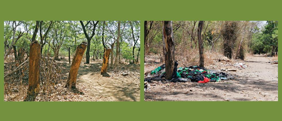 Citizens to clean Salim Ali Bird Sanctuary