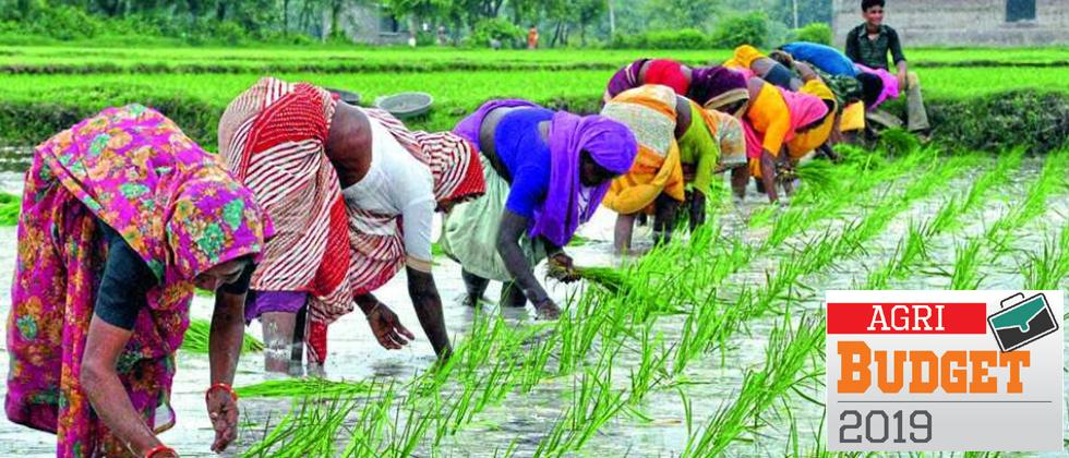 Agriculture sector disappointed with Budget