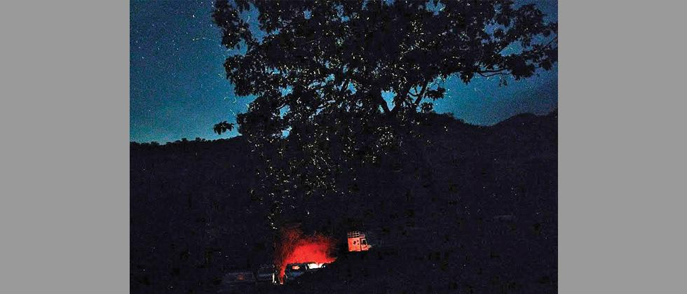Camping with fireflies becoming popular among young Puneites