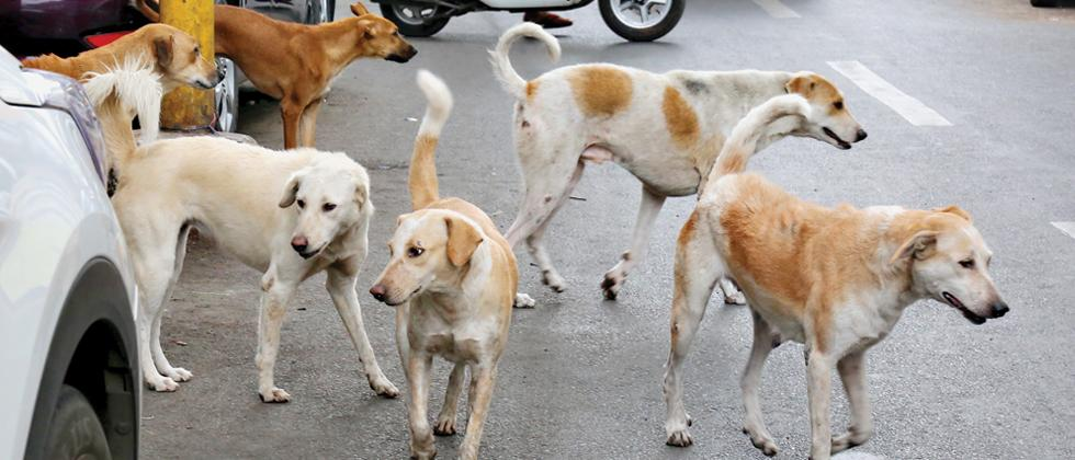 Move to give stray dogs a home of their own