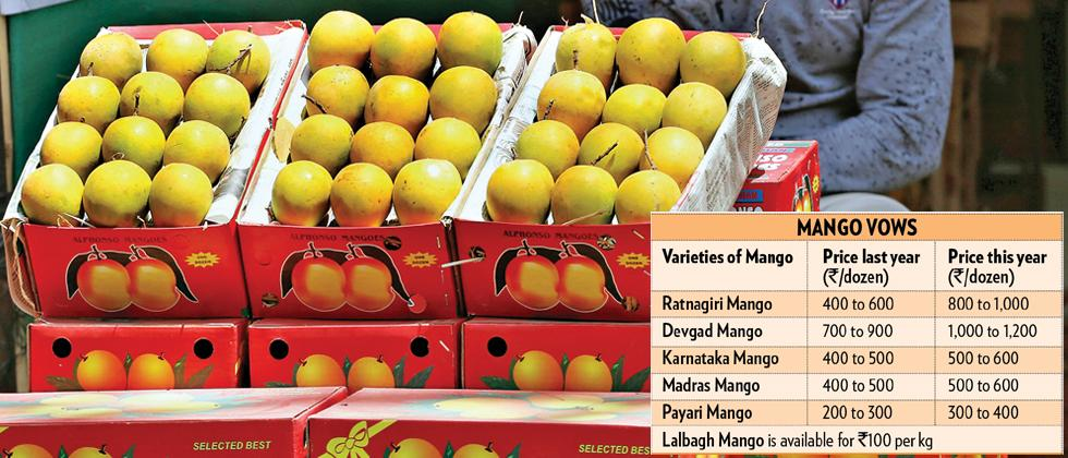 Weather takes away mango yield
