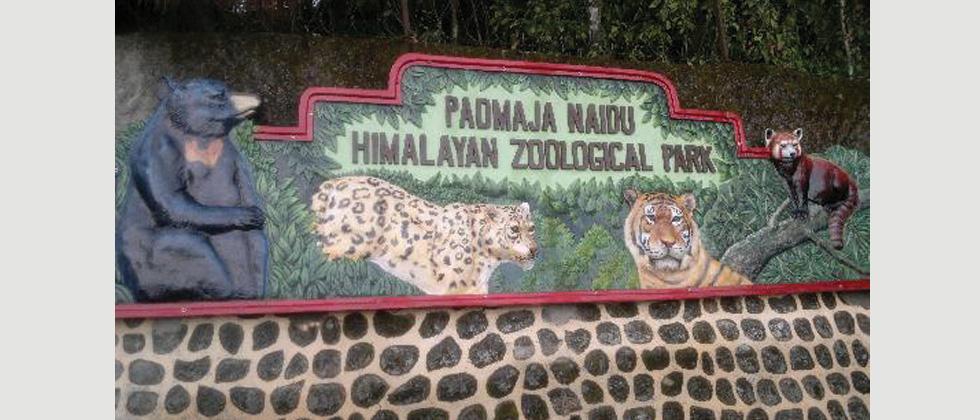 350 animals in Darjeeling Zoo face shutdown heat