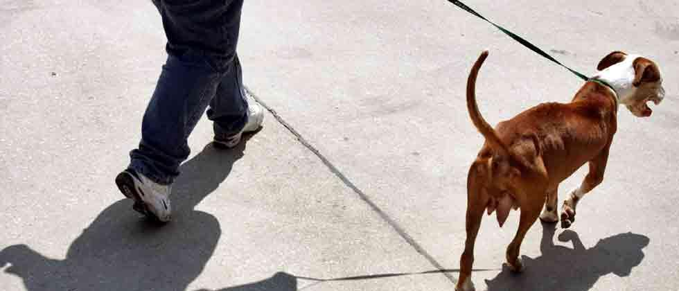 PMC's apathy discouraging pet lovers from obtaining licence
