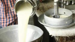 FDA seizes 3,50,000 litres of adulterated milk