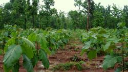 State allocates Rs. 43.97 cr for afforestation prog