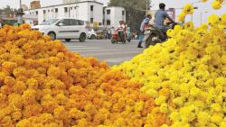 50 pc drop in prices of flowers during Dussehra