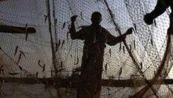 Trawlers with LEDs destroying marine ecosystem: Fisherfolk