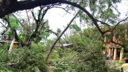 Cyclone Gaja toll rises to 45