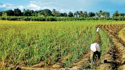 Govt may hike agri credit target to Rs 12 lakh cr