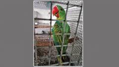 Pune DRI seizes 19 exotic birds