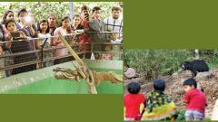 Vacations, new attractions boost footfalls at Katraj Zoo