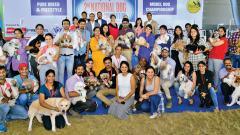 Dog grooming contest held in city