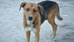PMC develops app to get data on stray dogs