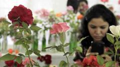 103rd Rose Show from today at Tilak Smarak Mandir