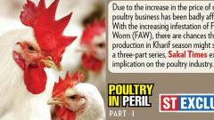 Higher maize price hits poultry farmers